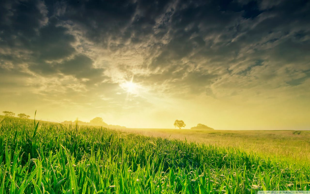 summer_field_in_the_morning-wallpaper-1280x800