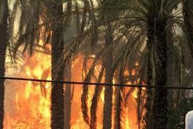 آتش سوزی در اروندکنار، بیش از 3 هکتار از نخیلات منطقه را از بین برد