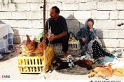 ایجاد بازارچه فروش مرغ زنده از ابتدا اشتباه بود!