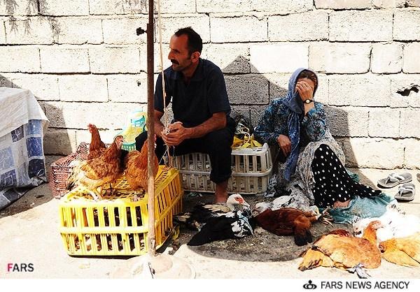 مرغ زنده فروشی در آبادان
