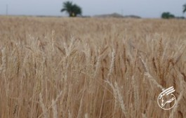رونق کشاورزی، بهترین شیوهء ایجاد درآمد پایدار در آبادان