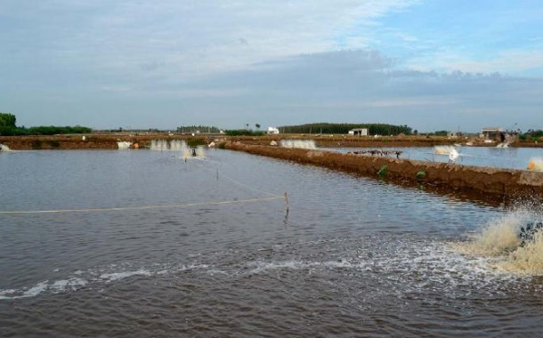 از سرگيري فعاليت مزارع پرورش ميگو در آبادان
