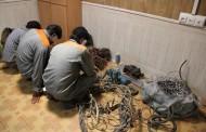 دستگیری اعضای باند سارقان سیم برق در آبادان